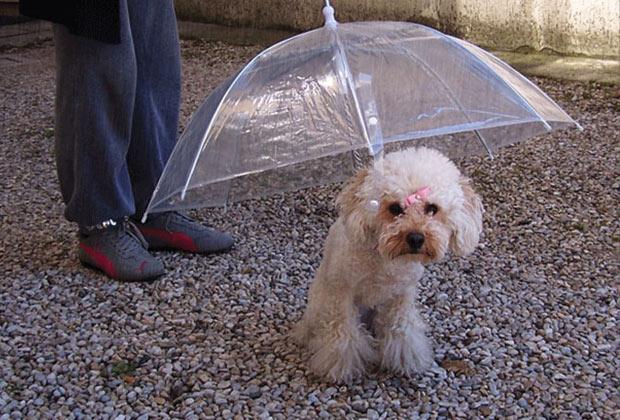 Guarda-Chuva para os cãezinhos. (Imagem: Reprodução)